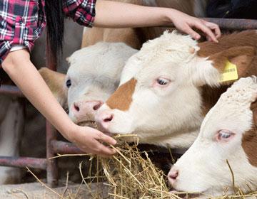 Activités de l'élevage