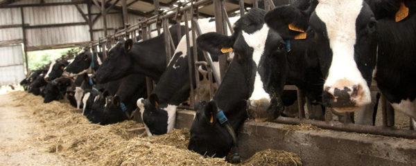 Aliments et compléments pour élevage bovins